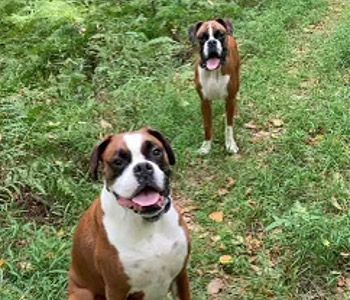 dogs outside